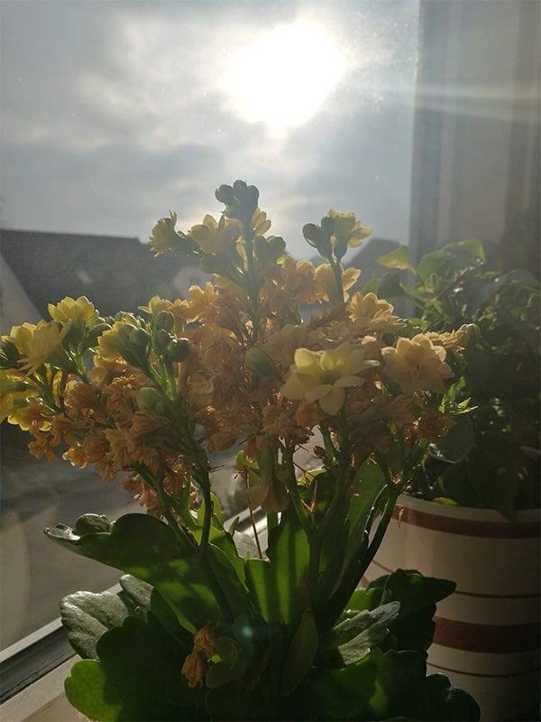 soare in danemarca