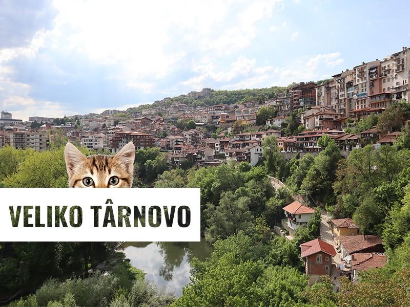 E tărâmul pisicilor la Veliko Târnovo, Bulgaria!